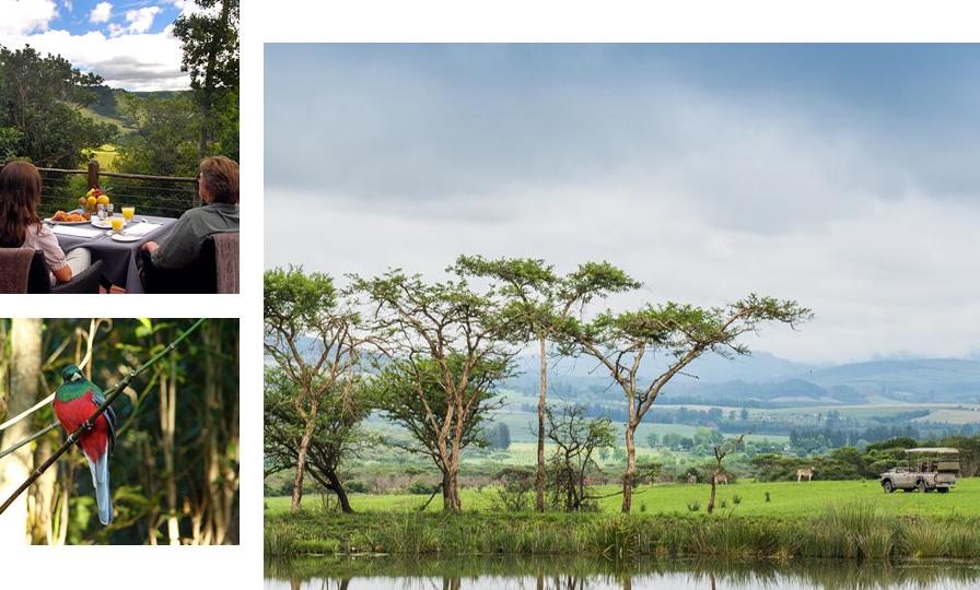 羚羊,长颈鹿,斑马等野生动物在草原上跳跃,各样的鸟儿在森林里歌唱.